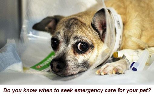Dog-Ecollar, IV-ASPCA