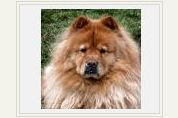Canine H3N2 Flu Virus Information