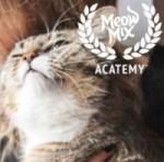 2016 Cat Oscars